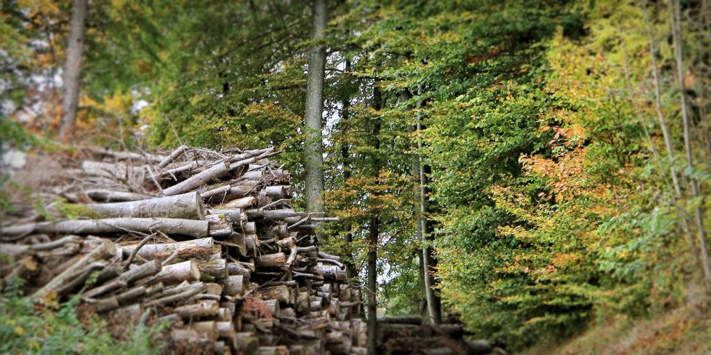 Header Holzprofile